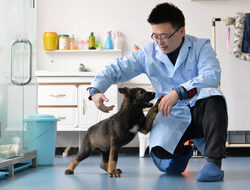 Китай клонира полицейско куче, ще ги произвежда масово до 10 години