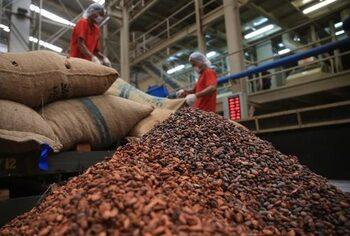Цените на какаото достигнаха най-ниското си ниво от 2008 г.