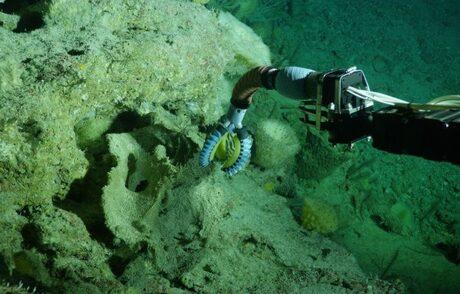 Роботизирана ръка е толкова мека, че може да гали медузи