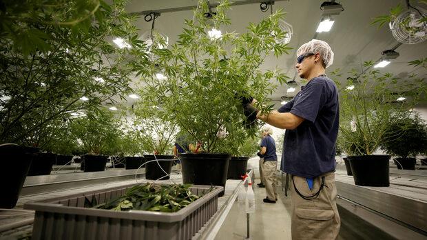 Легализацията на марихуана в Канада и бизнеса, свързан с нея, изисква подкрепата на застрахователите, след като се очаква да се развива и да расте
