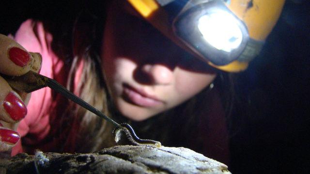 Събиране на пещерни безгръбначни