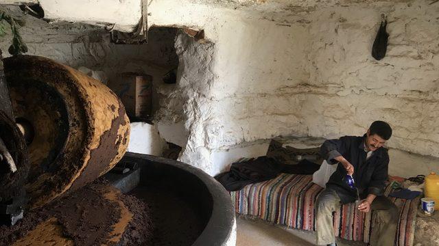 На гости на Мохамед и неговата камила Мабрук, които приготвят зехтин в традиционна малка манифактура