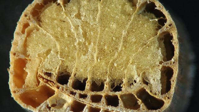 Порестата гъбеста маса, която запълва стъблата на папура, го прави ниско топлопроводим и добър изолатор. Освен това като блатно растение е с високо съдържание на полифенол и е устойчиво на мухъл и бактерии.